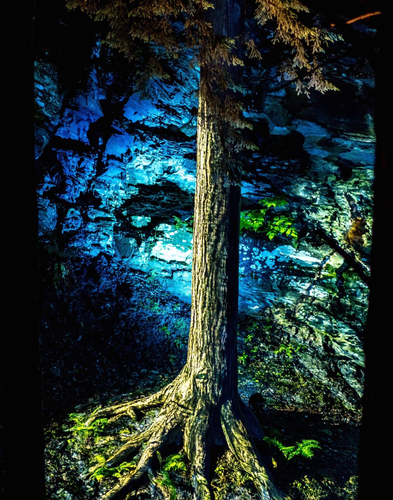 Lumina Foresta