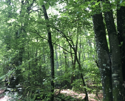 la forêt, source d'énergie