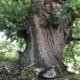 le mouvement de l'arbre